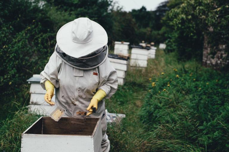 warsztaty pszczelarskie - pszczelarz pracuje przy otwartym ulu