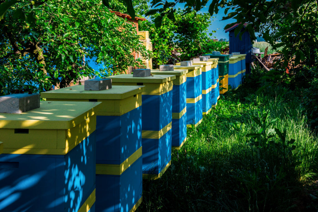 Pasieka Smakulskich - pasieka, niebiesko-żółte ule