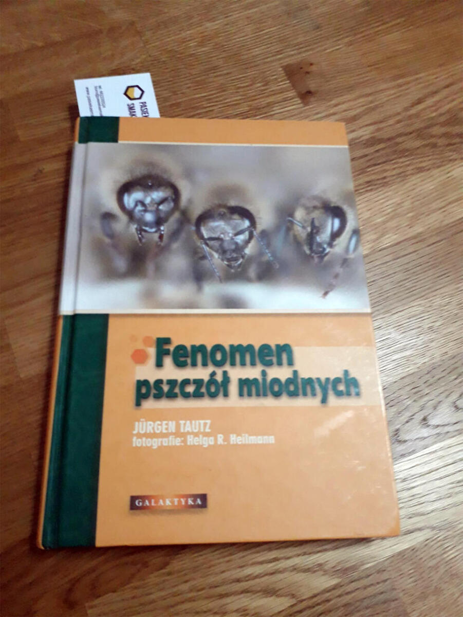 Fenomen pszczół miodnych - Pasieka Smakulskich, miód, agroturystyka, Wielkopolska, Wielkopolskie, Rawicz, Pakosław, Piotr Smakulski
