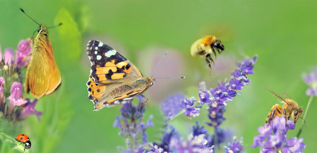 jakie rośliny miododajne wybrać - pasieka smakulskich - łąkowe kwiaty i owady