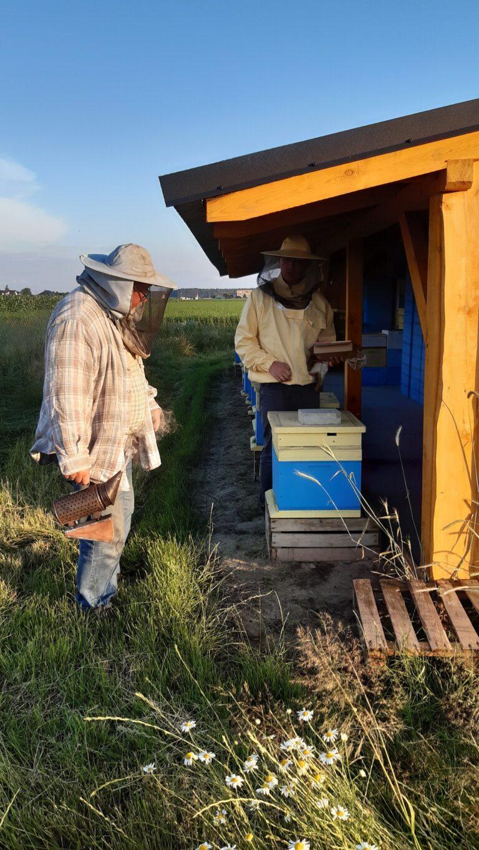 Pszczelarze doglądają pszczoły w pasiece
