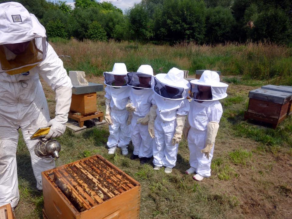 Warsztaty pszczelarskie dla dzieci, czworo dzieci w kombinezonach pszczelarskich przypatruje się odymianiu ula