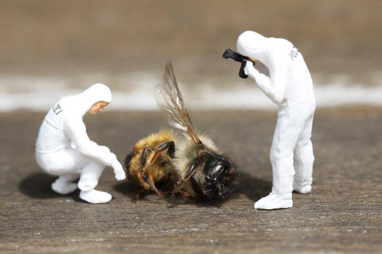 Czy pszczelarstwo jest ekologiczne?