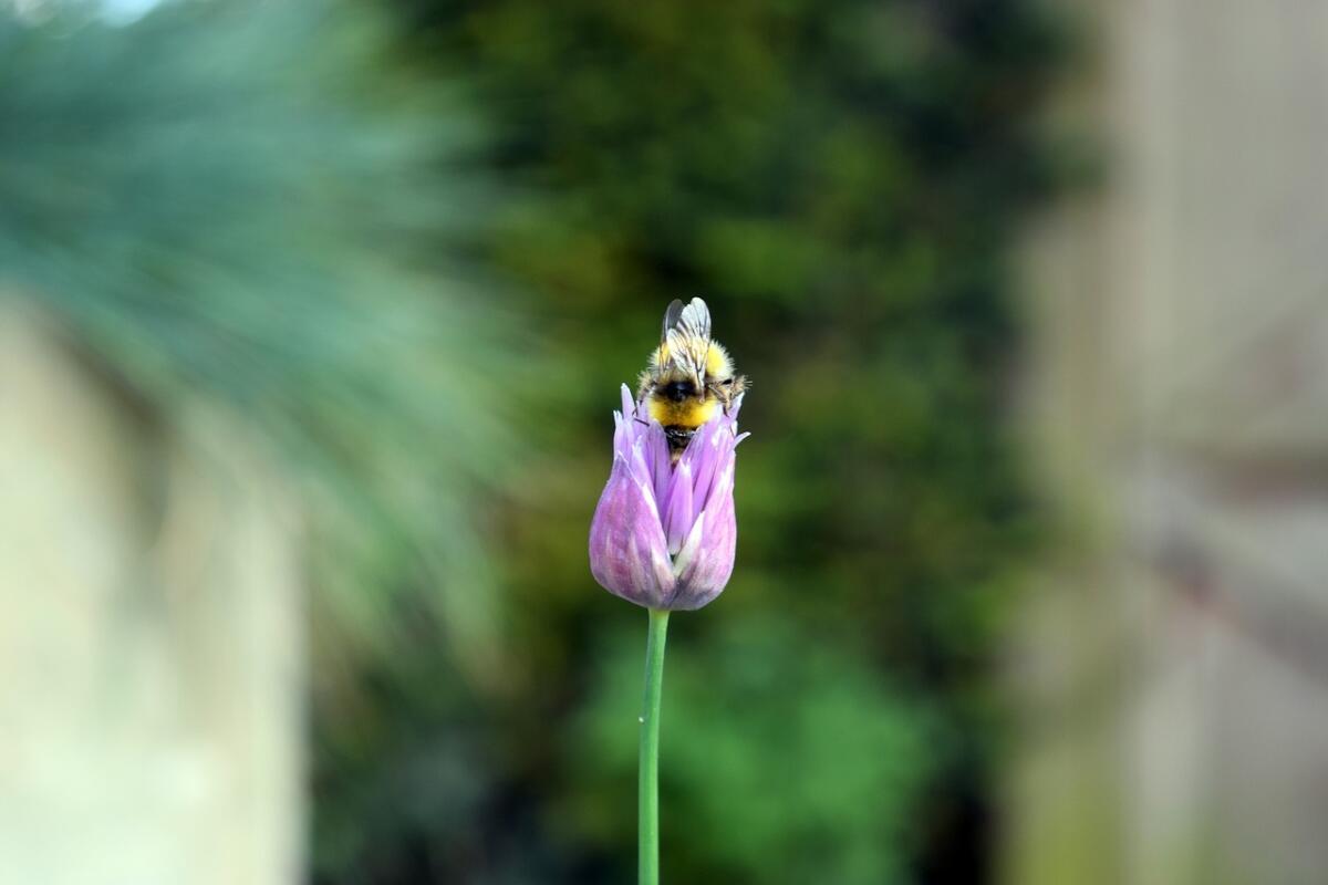 Jak pomóc pszczołom w Dzień Pszczoły? Jednym z pomysłów jest hotel dla owadów!